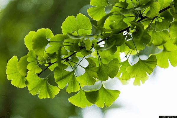 Народные средства, травы и продукты для разжижения крови