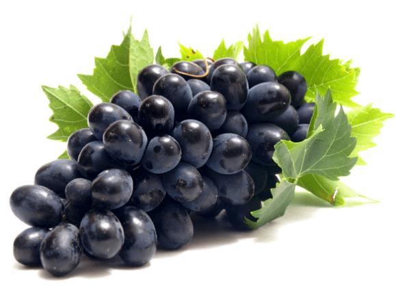Виноград, его польза для здоровья, применение в уходе за кожей и волосами