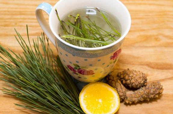 Сосновая хвоя - рецепты для оздоровления организма и повышения иммунитета