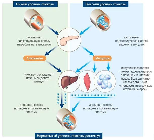 изменение уровня глюкозы и его причины